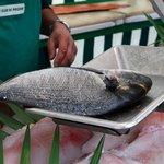 Rybí trh marché du jour