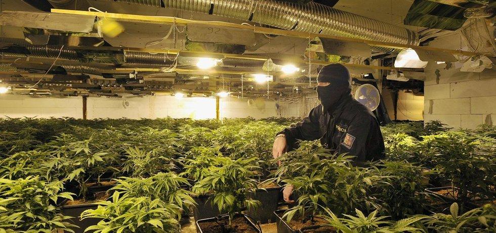Razie v pěstírně marihuany