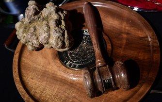 Aukce lanýžů v italské provincii Alba