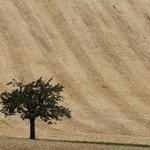 Pole s pšenicí, ilustrační foto