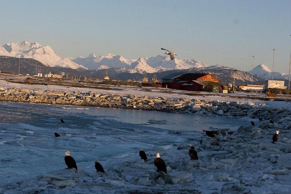 Město Homer a orli na pobřeží.