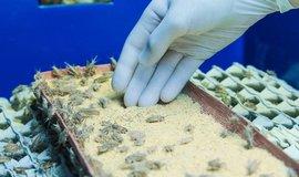 Což takhle dát si cvrčka? Český startup rozjíždí revoluci ve výživě