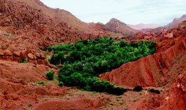 ilustrační foto, Růže za branou pouště