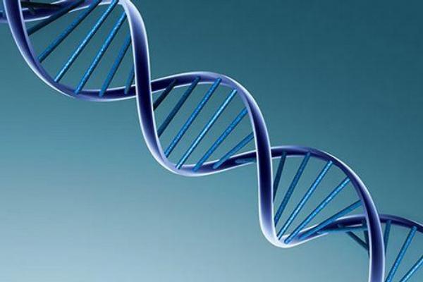 DNA, genetika, geny