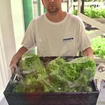 Zeleniny je dost pro komerční prodej