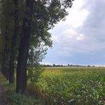 Na šenovském poli u Volenství ještě roste kukuřice, vzniknout tu ale mají parcely až pro 197 domů.