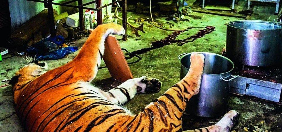 Tygří zátah