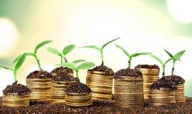 Zelená investice, ilustrační foto