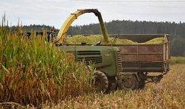 Sklizeň kukuřice - ilustrační foto