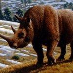 Nosorožec srstnatý. Další adept na oživení.