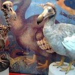 Dronte mauricijský známý pod názvem blboun nejapný. Byl vyhuben lidmi, ale vědci uvažují o jeho vzkříšení pomocí DNA z kostry.