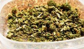 Legálně vypěstovaná marihuana