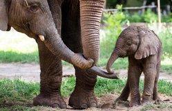 Sloní mládě, ilustrační foto