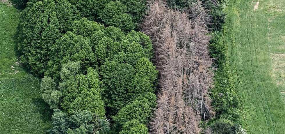 Kůrovcová kalamita decimuje dřevařské hospodaření. Nejvíc tím trpí kasa Lesů ČR.