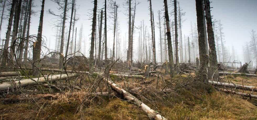 Stromy napadené kůrovcem - ilustrační foto