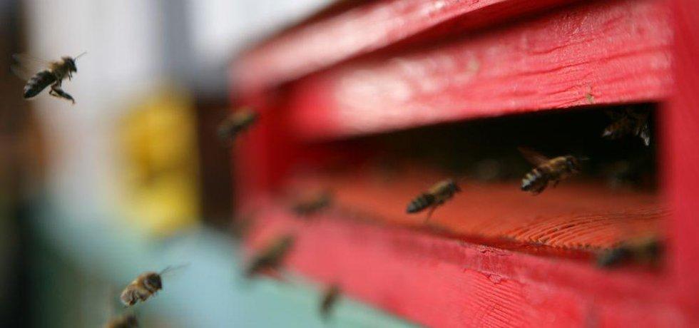 Včelí úl, ilustrační foto