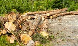 Těžba dřeva na Šumavě u Čertova a Černého jezera