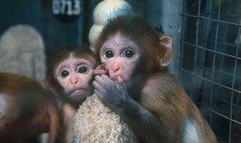 Testování na zvířatech, ilustrační foto