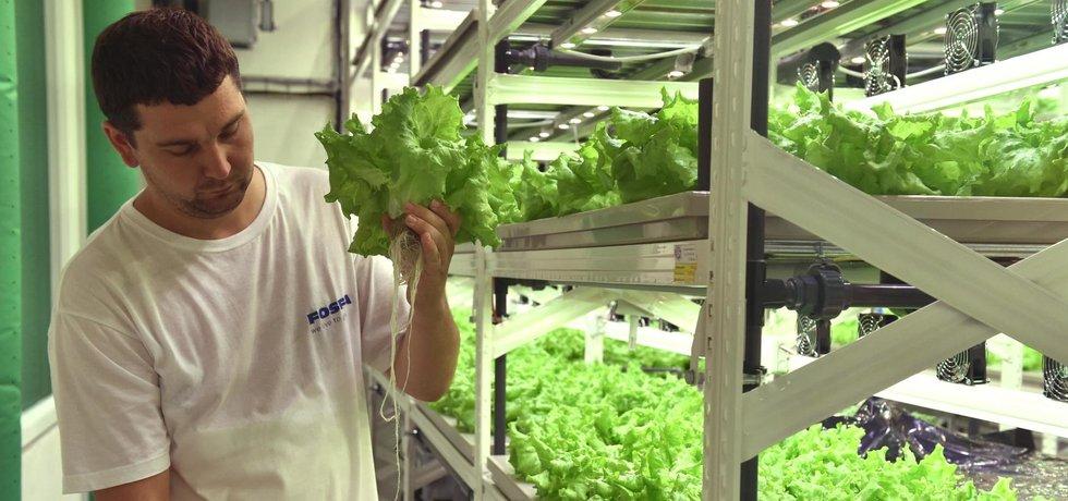 Fosfa se zaměřuje i na vertikální farmaření