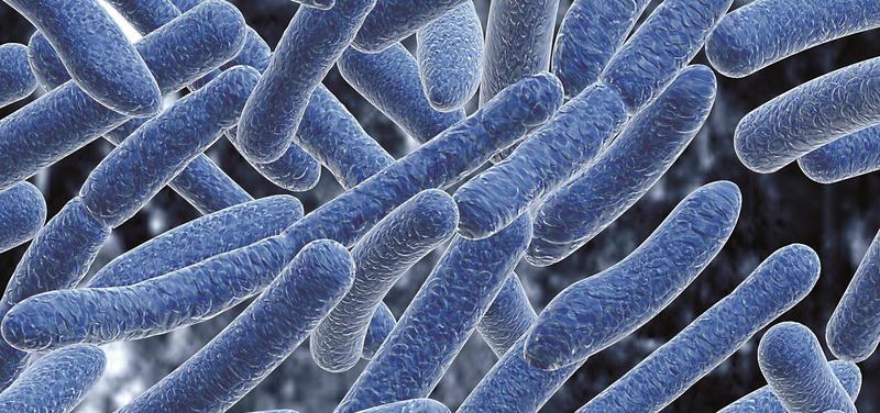 *bakterie