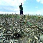 Zemědělství, ilustrační foto