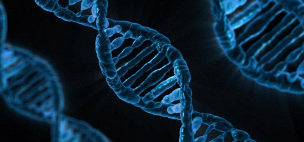 Lidská DNA