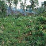 Deštný prales mizí
