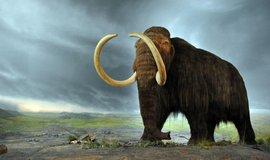 Model mamuta srstnatého v muzeu v kanadské Britské Kolumbii.