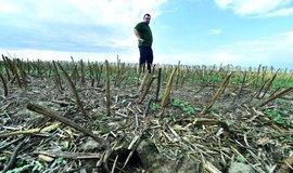 Konec beztrestnosti. Stát začíná přísněji postihovat chyby zemědělců