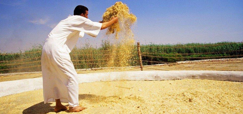 Třídění pšenice v Egyptě, ilustrační foto