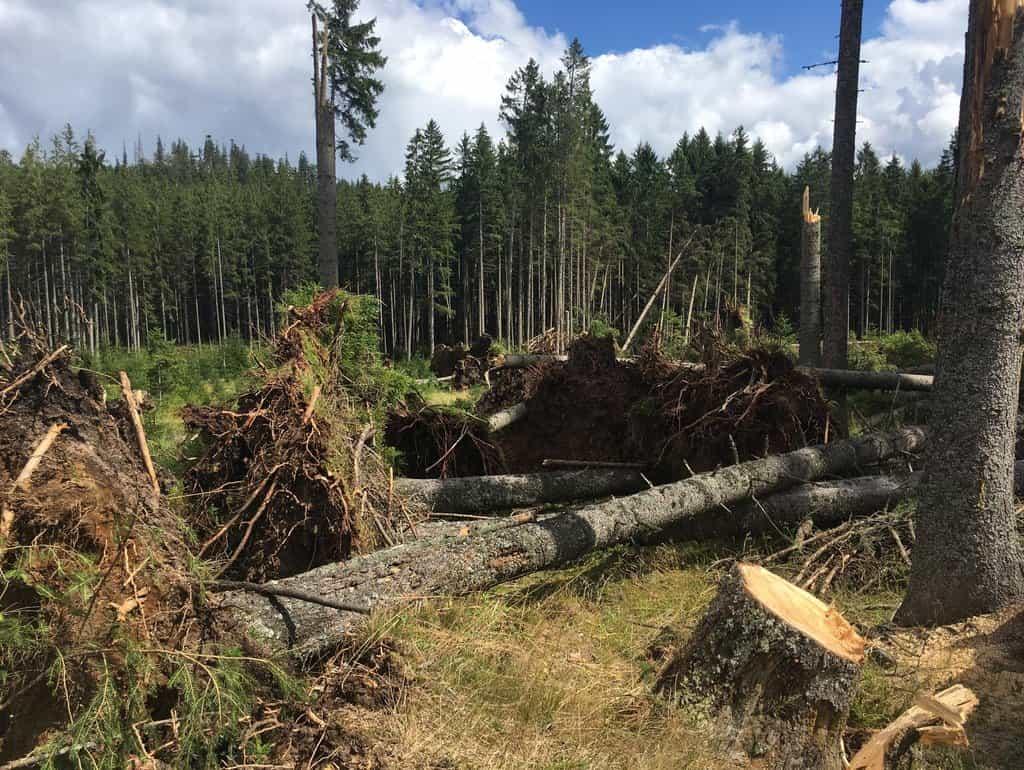 Vichřice vyvrátila nebo polámala tisíce stromů