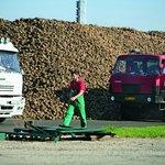 Zemědělci letos očekávají u řepy mimořádně vysoké výnosy