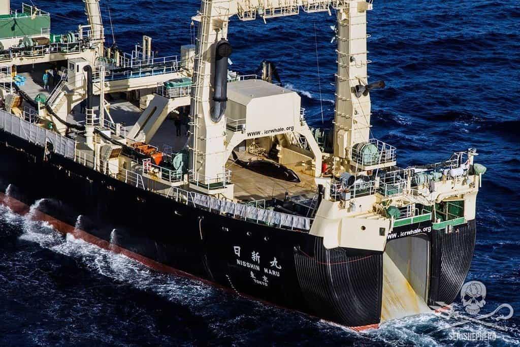 """Jedna z největších japonských """"výzkumných"""" lodí"""