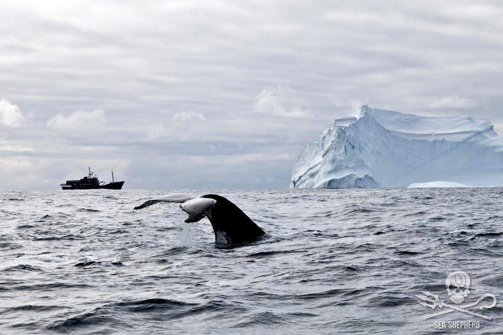 Záběr z antarktické mise