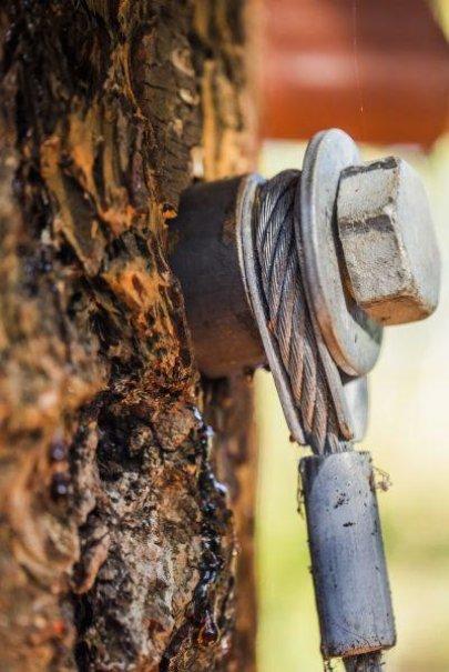 Microsoft spolupracoval Washingtonskou univerzitou, aby stavby stromy nepoškodily-