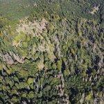 Komu patří Česko - lesy