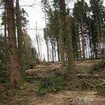 Těžba v šumavských lesích