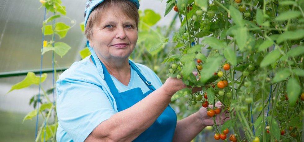 Pracující důchodkyně, ilustrační foto
