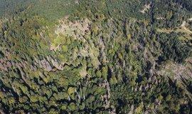 Lesy ČR podaly dovolání proti restitučnímu nároku rodu Walderode