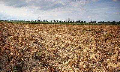 Vyschlé pole, ilustrační foto