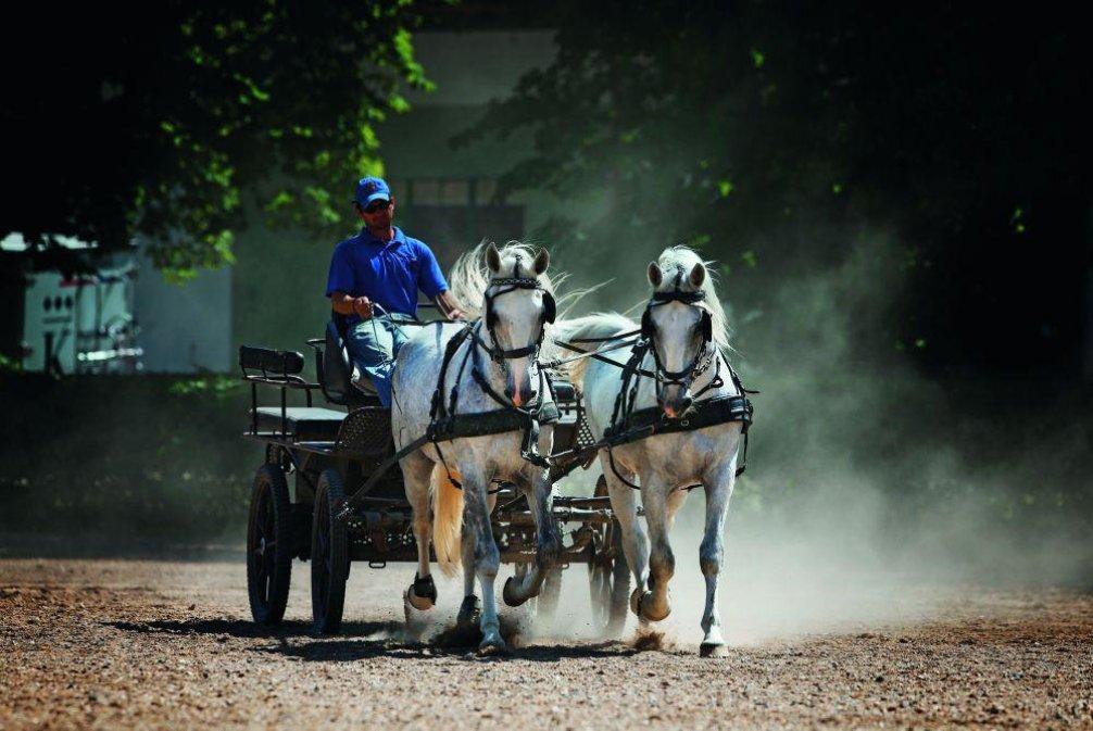 Starokladrubští koně, ilustrační foto