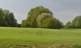 Pole, ilustrační foto