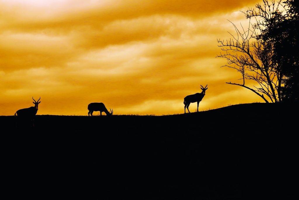 Nevšední večer v safari. Může se protáhnout i do rána