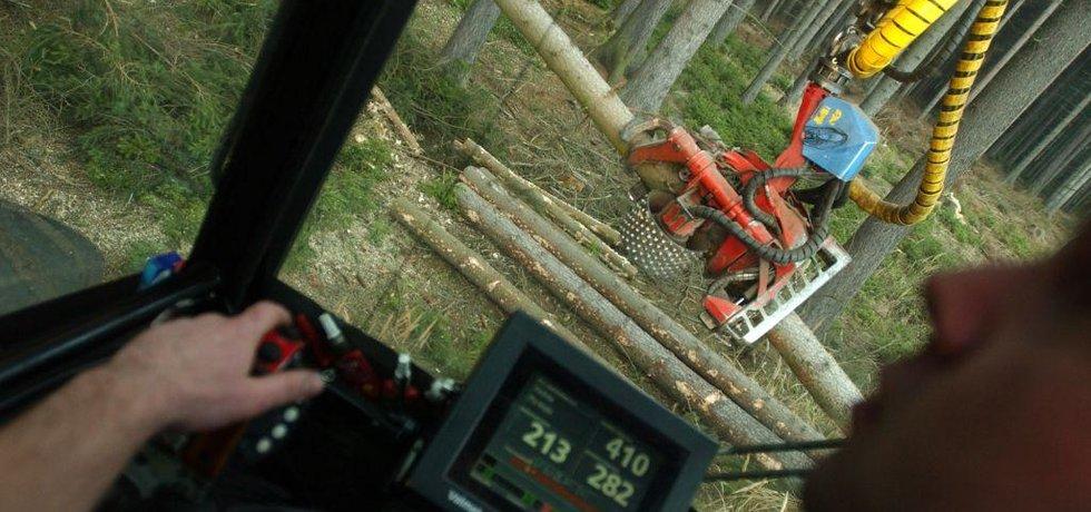 Lesní práce Lesy ČR