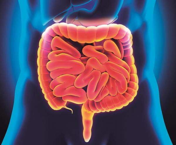 gastroenterologie, střeva