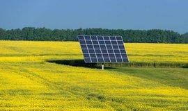 Rána řepce na solar, ilustrační foto