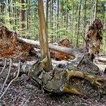 Klima v lesích kolem Brna se mění spíše na balkánské.