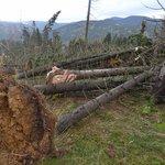 Následky vichřice v lesích