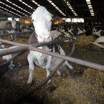 Zemědělské družstvo Rosice u Chrasti na Chrudimsku