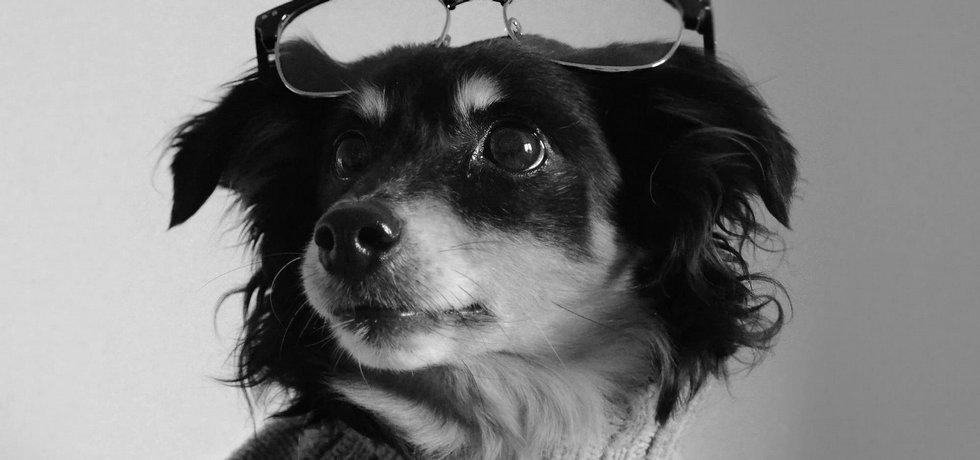 Pes s osobností. Mladý fotograf Ondřej Wolf se snaží správně zvoleným oblečením vystihnout psí povahu.
